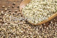 Top Quality Hemp seeds