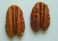 Grade A Quality Pecan Nuts