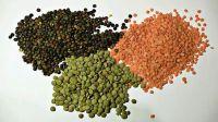 Red Lentils, Green Lentils Canada, Masoor Dal, Red Lentils, Green Lentils Split Red Lentils