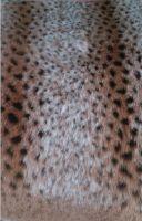 Animal Pattern Plush & Acrylic Fabric