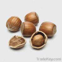 Sell Hazelnuts