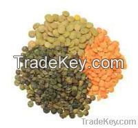 Lentils For Sell