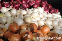 Fresh Yellow and Red onion