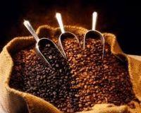 Sell Premium Arabica Coffee