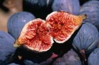 Hot sale figs , high quality fresh fruit figs, dry figs