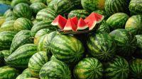 Fresh Water Melon ( Export Grade )