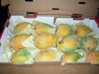 Fresh Mangoes Export Standard