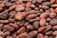 Cocoa Beans For Sales