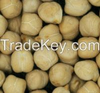 Rounded kabuli chickpeas for export.