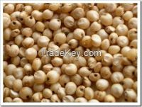 Sorghum for human and animal feed production available