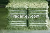 Alfalfa hay for amimal feed for sale