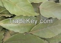 Dried Bay Leaf Production/Laurel Leaves (Bay Leaves) Wholesale