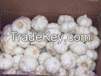 100% fresh natural garlic , Best price and quality