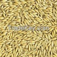 high quality hulled oats with best oats price