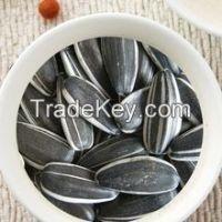 Sunflower Seeds 1121 Round Shape