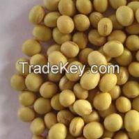 Non GMO High Protein Soybeans