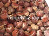 2015 high quality bulk chestnut