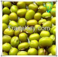 Competitive Price Vigna bean Fresh Green Bean for Sale