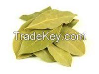 Natural Bay Laurel Leaf leave price