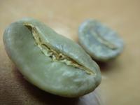 Maragogype Coffee Beans