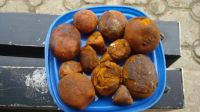 Ox Gallstones Whole and Broken, Bladder Type and in sachets Packaging ox cow gallstones