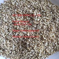 RAW CASHEW KERNEL BB GOOD QUALITY FOR WHOLESALES VIETNAM