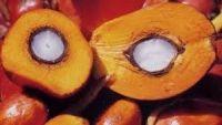 Palm Oil Kernel