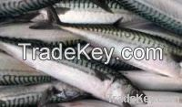 Sell Mackerel, Bonito, Tilapia Fish