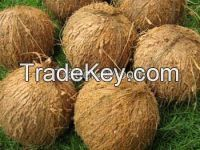 Best Price Semi Husked Coconut For Sale