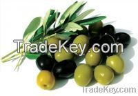 Sell Fresh Black And Green Olives
