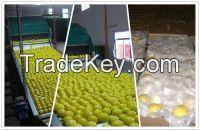 Fresh Eureka Lemon ( Adalia - Verna - green lime )