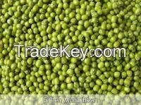 New Crop Green Mung Bean Best Price