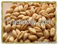 Sell Wheat Grains