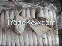 Fresh / Frozen Silver Pomfret Fish Whole Round