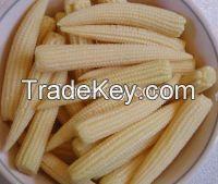 Frozen Fresh Baby Corn For Sale