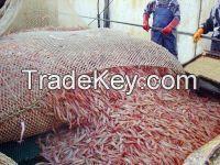 GRADE A Frozen Red Shrimp(size 30/50 50/70) Frozen Red Shrimp