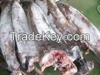 New Loading Frozen Swordfish HGT, DWT For Steak And Loin