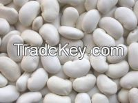 Premium Kidney Beans