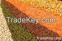 Red And Green Lentils For Sale
