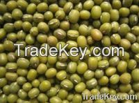 Mung Beans For Sale