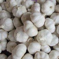 New Crop Fresh Natural Garlic White Garlic with Best Garlic Price