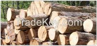 Sell Timber Wood