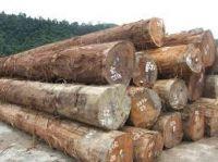 Ebony wood logs and timber