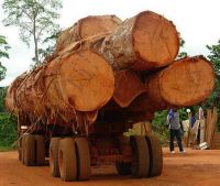 Sapele African wood logs and timber