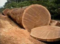 Tali wood logs and sawn timber