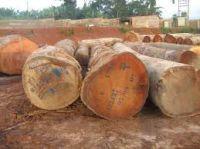 African Padauk wood logs and timber