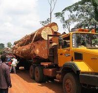 Bubinga African wood logs and timber
