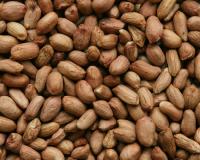 Runner Peanut/ Argentine Origin