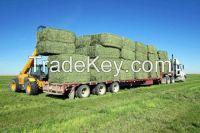 Best Quality Alfafa Hay, Timothy Hay, Alfafa in Bales