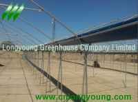 tunnel-connected greenhouse hot
